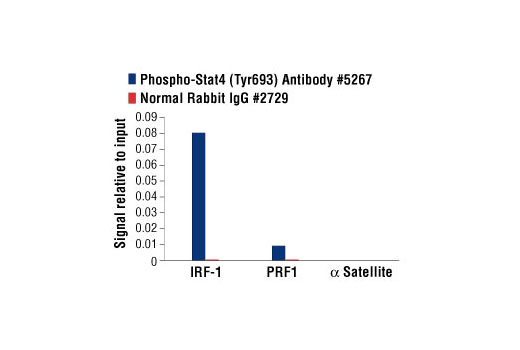 Polyclonal Antibody Immunoprecipitation Positive Regulation of Transcription