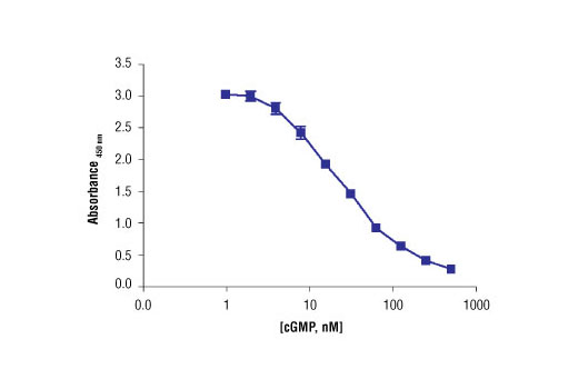 Image 3: Cyclic GMP XP® Assay Kit