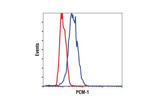 Polyclonal Antibody Immunofluorescence Immunocytochemistry PCM-1