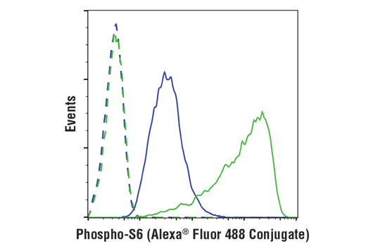 Flow cytometric analysis of Jurkat cells, untreated (green) or treated with LY294002 #9901, Wortmannin #9951, and U0126 #9903 (50 μM, 1 μM, and 10 μM, 3 hr; blue) using Phospho-S6 Ribosomal Protein (Ser240/244) (D68F8) XP® Rabbit mAb (Alexa Fluor® 488 Conjugate) (solid lines) or concentration-matched Rabbit (DA1E) mAb IgG XP® Isotype Control</p><p>(Alexa Fluor® 488 Conjugate) #2975 (dashed lines).