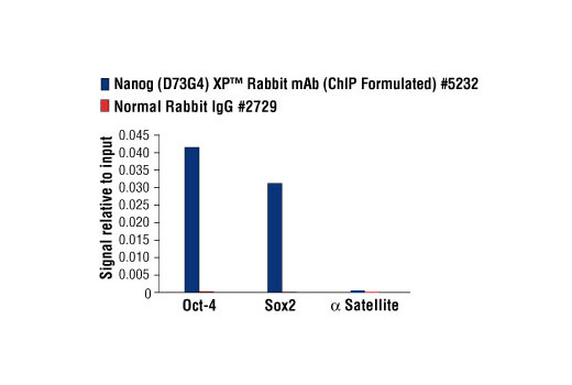 Chromatin immunoprecipitations were performed with cross-linked chromatin from NCCIT cells and either Nanog (D73G4) XP<sup>®</sup> Rabbit mAb (ChIP Formulated) or Normal Rabbit IgG #2729 using SimpleChIP<sup>®</sup> Enzymatic Chromatin IP Kit (Magnetic Beads) #9003. The enriched DNA was quantified by real-time PCR using SimpleChIP<sup>®</sup> Human Oct-4 Promoter Primers #4641, SimpleChIP<sup>®</sup> Human Sox2 Promoter Primers #4649, and SimpleChIP<sup>®</sup> Human α Satellite Repeat Primers #4486. The amount of immunoprecipitated DNA in each sample is represented as signal relative to the total amount of input chromatin, which is equivalent to one.