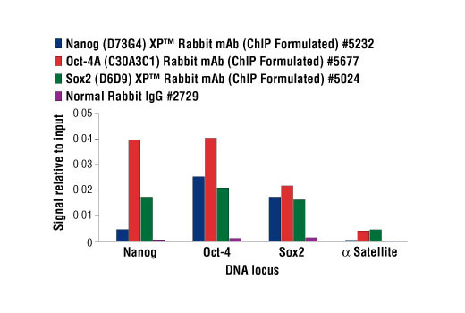 Chromatin immunoprecipitations were performed with cross-linked chromatin from NTERA-2 cells and Nanog, Oct-4 and Sox2 antibodies, or Normal Rabbit IgG, using SimpleChIP<sup>®</sup> Enzymatic Chromatin IP Kit (Magnetic Beads) #9003. The enriched DNA was quantified by real-time PCR using human Nanog promoter primers, SimpleChIP<sup>®</sup> Human Oct-4 Promoter Primers #4641, SimpleChIP<sup>®</sup> Human Sox2 Promoter Primers #4649, and SimpleChIP<sup>®</sup> Human α Satellite Repeat Primers #4486. The amount of immunoprecipitated DNA in each sample is represented as signal relative to the total amount of input chromatin, which is equivalent to one.