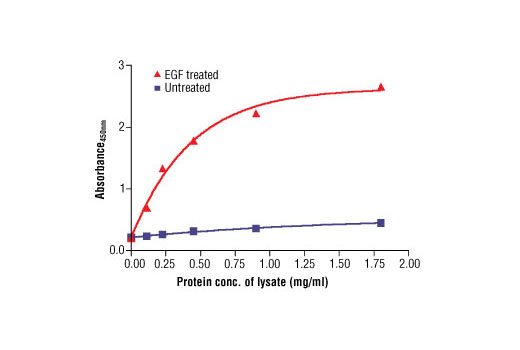 Figure 2: The relationship between protein concentration of lysates from untreated and EGF-treated A431 cells and the absorbance at 450 nm is shown. After starvation, A431 cells (85% confluence) were treated with EGF (100 ng/ml) for 5 min at 37ºC and then lysed.