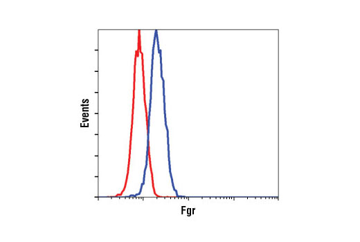 Flow cytometric analysis of Raji cells, using Fgr Antibody (blue) compared to a nonspecific negative control antibody (red).