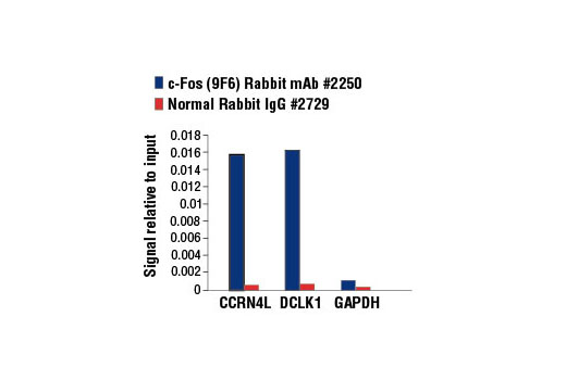 Chromatin IP - c-Fos (9F6) Rabbit mAb