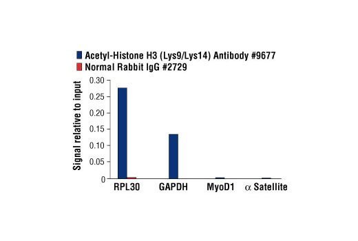 Chromatin immunoprecipitations were performed with cross-linked chromatin from HeLa cells and either Acetyl-Histone H3 (Lys9/Lys14) Antibody or Normal Rabbit IgG #2729 using SimpleChIP<sup>®</sup> Enzymatic Chromatin IP Kit (Magnetic Beads) #9003. The enriched DNA was quantified by real-time PCR using SimpleChIP<sup>®</sup> Human RPL30 Exon 3 Primers #7014, SimpleChIP<sup>®</sup> Human GAPDH Exon 1 Primers #5516, SimpleChIP<sup>®</sup> Human MyoD1 Exon 1 Primers #4490, and SimpleChIP<sup>®</sup> Human α Satellite Repeat Primers #4486. The amount of immunoprecipitated DNA in each sample is represented as signal relative to the total amount of input chromatin, which is equivalent to one.