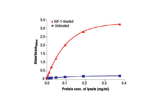 Figure 2. The relationship between lysate protein concentration from untreated and IGF-1-treated MCF-7 cells and the absorbance at 450 nm using the PathScan<sup>®</sup> Phospho-p70 S6 Kinase (Thr389) Sandwich ELISA Kit #7063 is shown. MCF-7 cells were treated with 100 ng/ml IGF-1 #3093 for 20 minutes at 37ºC and then lysed.