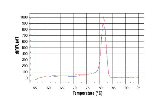 PCR product melting curves were obtained for real-time PCR reactions performed using SimpleChIP<sup>®</sup> Human Sox2 Promoter Primers. Data is shown for both duplicate PCR reactions using 20 ng of total DNA. The melt curve consists of 80 melt cycles, starting at 55°C with increments of 0.5°C per cycle. Each peak is formed from the degradation of a single PCR product.