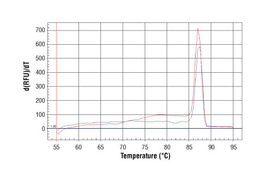 PCR product melting curves were obtained for real-time PCR reactions performed using SimpleChIP<sup>®</sup> Mouse Oct-4 Promoter Primers. Data is shown for both duplicate PCR reactions using 20 ng of total DNA. The melt curve consists of 80 melt cycles, starting at 55°C with increments of 0.5°C per cycle. Each peak is formed from the degradation of a single PCR product.