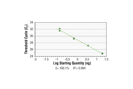 SimpleChIP<sup>®</sup> Mouse Oct-4 Promoter Primers were tested on DNA isolated from cross-linked cells using the SimpleChIP<sup>®</sup> Enzymatic Chromatin IP Kit (Magnetic Beads) #9003. Real-time PCR was performed in duplicate on a serial dilution of 2% total input DNA (20 ng, 4 ng, 0.8 ng, and 0.16 ng) using a real-time PCR detection system and SYBR<sup>®</sup> Green reaction mix. The PCR amplification efficiency (E) and correlation coefficient (R<sup>2</sup>) were calculated based on the corresponding threshold cycle (C<sub>T</sub>) of each dilution sample during 40 cycles of real-time PCR (95°C denaturation for 15 sec, 65°C anneal/extension for 60 sec).