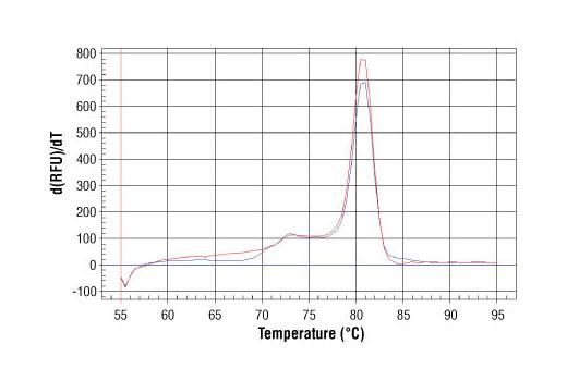 Primer Set - SimpleChIP® Mouse XIST Intron 1 Primers - Chromatin IP - 500 µl #4659 - #4659