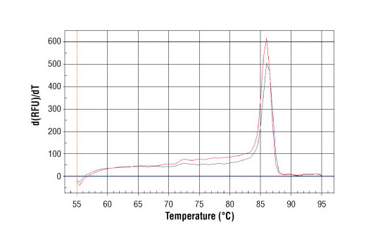 PCR product melting curves were obtained for real-time PCR reactions performed using SimpleChIP<sup>®</sup> Human CDKN1A Intron 1 Primers. Data is shown for both duplicate PCR reactions using 20 ng of total DNA. The melt curve consists of 80 melt cycles, starting at 55°C with increments of 0.5°C per cycle. Each peak is formed from the degradation of a single PCR product.