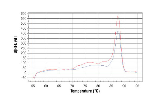 PCR product melting curves were obtained on real-time PCR reactions performed using SimpleChIP<sup>®</sup> Human γ-Actin Promoter Primers. Data is shown for both duplicate PCR reactions using 20 ng of total DNA. The melt curve consists of 80 melt cycles, starting at 55°C with increments of 0.5°C per cycle. Each peak is formed from the degradation of a single PCR product.