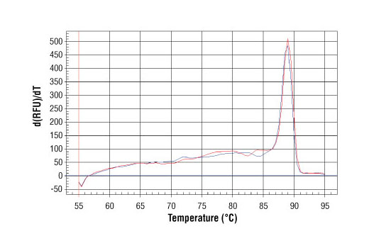 PCR product melting curves were obtained for real-time PCR reactions performed using SimpleChIP<sup>®</sup> Human ID1 Promoter Primers. Data is shown for both duplicate PCR reactions using 20 ng of total DNA. The melt curve consists of 80 melt cycles, starting at 55°C with increments of 0.5°C per cycle. Each peak is formed from the degradation of a single PCR product.