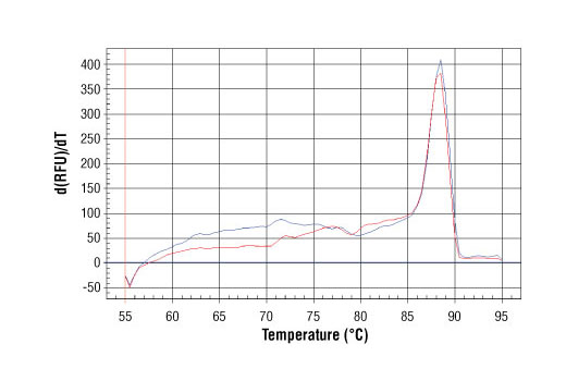 PCR product melting curves were obtained for real-time PCR reactions performed using SimpleChIP<sup>®</sup> Human H19/Igf2 Imprinting Control Region Primers. Data is shown for both duplicate PCR reactions using 20 ng of total DNA. The melt curve consists of 80 melt cycles, starting at 55°C with increments of 0.5°C per cycle. Each peak is formed from the degradation of a single PCR product.