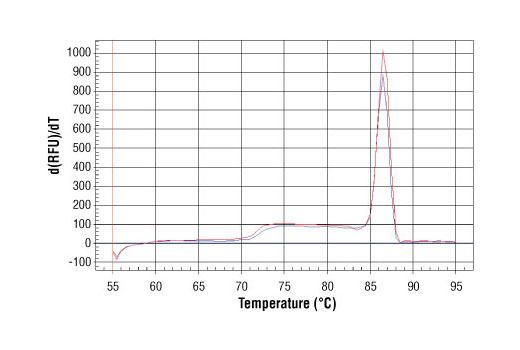 PCR product melting curves were obtained for real-time PCR reactions performed using SimpleChIP<sup>®</sup> Human TAP1 Promoter Primers. Data is shown for both duplicate PCR reactions using 20 ng of total DNA. The melt curve consists of 80 melt cycles, starting at 55°C with increments of 0.5°C per cycle. Each peak is formed from the degradation of a single PCR product.