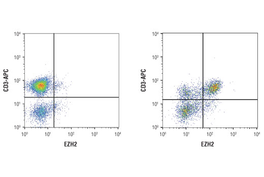 Image 27: Polycomb Group 2 (PRC2) Antibody Sampler Kit