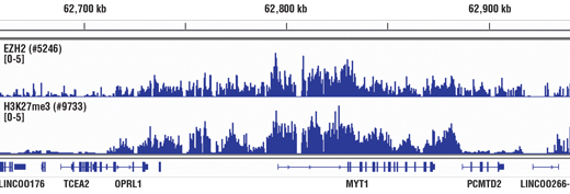 Image 1: Polycomb Group 2 (PRC2) Antibody Sampler Kit