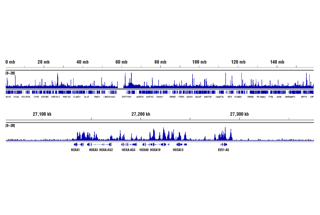 Image 11: Polycomb Group 2 (PRC2) Antibody Sampler Kit