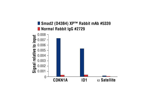 Chromatin immunoprecipitations were performed with cross-linked chromatin from HaCaT cells treated with Human TGF-β3 #8425 (7 ng/ml) for 1 h and either Smad2 (D43B4) XP<sup>®</sup> Rabbit mAb #5339 or Normal Rabbit IgG #2729 using SimpleChIP<sup>®</sup> Enzymatic Chromatin IP Kit (Magnetic Beads) #9003. The enriched DNA was quantified by real-time PCR using SimpleChIP<sup>®</sup> Human CDKN1A Intron 1 Primers #4669, SimpleChIP<sup>®</sup> Human ID1 Promoter Primers #5139, and SimpleChIP<sup>®</sup> Human α Satellite Repeat Primers #4486. The amount of immunoprecipitated DNA in each sample is represented as signal relative to the total amount of input chromatin, which is equivalent to one.