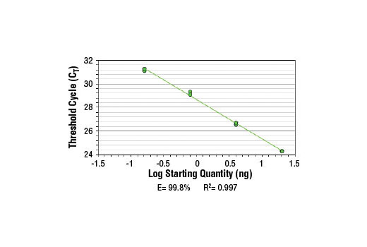 PCR Efficiency