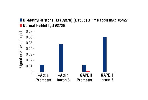 Image 2: Methyl-Histone H3 (Lys79) Antibody Sampler Kit