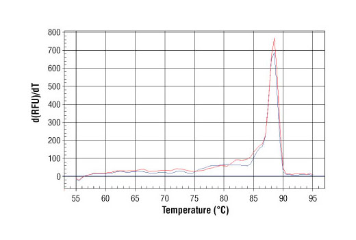 PCR product melting curves were obtained for real-time PCR reactions performed using SimpleChIP<sup>®</sup> Mouse PITX3 Intron 1 Primers. Data is shown for both duplicate PCR reactions using 20 ng of total DNA. The melt curve consists of 80 melt cycles, starting at 55°C with increments of 0.5°C per cycle. Each peak is formed from the degradation of a single PCR product.