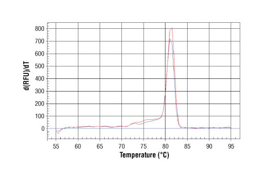 PCR product melting curves were obtained for real-time PCR reactions performed using SimpleChIP<sup>®</sup> Mouse GAPDH Intron 2 Primers. Data is shown for both duplicate PCR reactions using 20 ng of total DNA. The melt curve consists of 80 melt cycles, starting at 55°C with increments of 0.5°C per cycle. Each peak is formed from the degradation of a single PCR product.