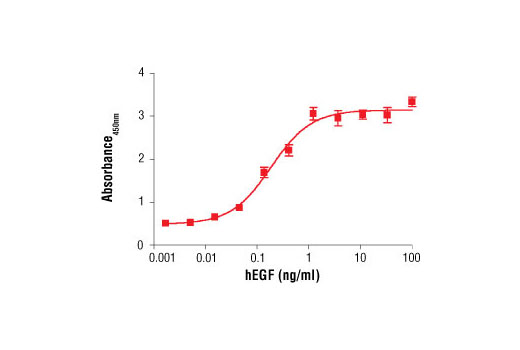 Figure 2. Treatment of MCF 10A cells with Human Epidermal Growth Factor (hEGF) #8916 increases cell proliferation as detected by BrdU Cell Proliferation Assay Kit #6813. MCF 10A cells were seeded at 1x10<sup>4</sup> cells/well in a 96-well plate and incubated overnight. Cells were then starved in serum free medium overnight. hEGF was added to the plate and cells were incubated for 24 hr. Finally, 10 μM BrdU was added to the plate and cells were incubated for 4 hr.