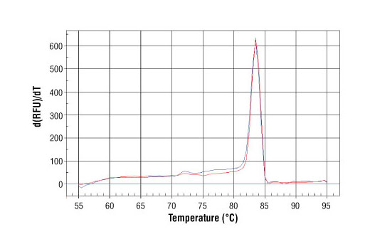PCR product melting curves were obtained for real-time PCR reactions performed using SimpleChIP<sup>®</sup> IκBα Promoter Primers. Data is shown for both duplicate PCR reactions using 20 ng of total DNA. The melt curve consists of 80 melt cycles, starting at 55ºC with increments of 0.5ºC per cycle. Each peak is formed from the degradation of a single PCR product.