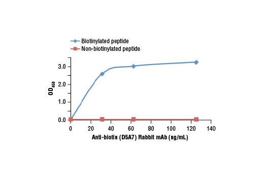 Image 2: Anti-biotin (D5A7) Rabbit mAb