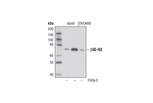 Monoclonal Antibody Immunoprecipitation Collagen Binding - count 10