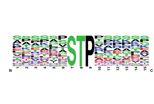 PTMScan® Phospho-ST*P Motif (ST*P) XP® Rabbit mAb Kit - 1 Kit #5566 - Signal Transduction Reagents