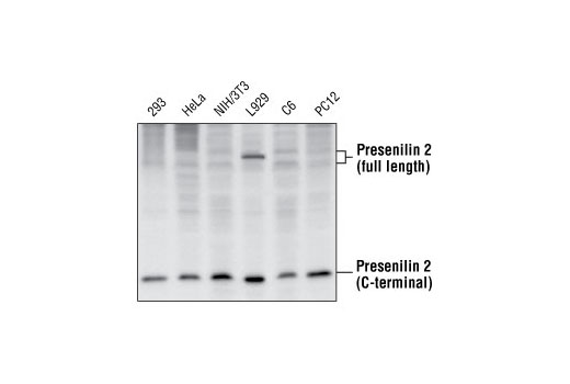 Polyclonal Antibody Positive Regulation of Coagulation