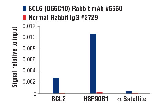 Chromatin immunoprecipitations were performed with cross-linked chromatin from Raji cells and either BCL6 (D65C10) Rabbit mAb, or Normal Rabbit IgG #2729, using SimpleChIP<sup>®</sup> Enzymatic Chromatin IP Kit (Magnetic Beads) #9003. The enriched DNA was quantified by real-time PCR using SimpleChIP<sup>®</sup> Human BCL2 Promoter Primers #12924, SimpleChIP<sup>®</sup> Human HSP90B1 Promoter Primers #12899, and SimpleChIP<sup>®</sup> Human α Satellite Repeat Primers #4486. The amount of immunoprecipitated DNA in each sample is represented as signal relative to the total amount of input chromatin, which is equivalent to one.