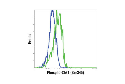 Flow cytometric analysis of HeLa cells, untreated (blue) and UV-treated (green), using Phospho-Chk1 (Ser345) (133D3) Rabbit mAb.