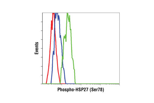 Flow cytometric analysis of HeLa cells, untreated (blue) or UV treated (green), using Phospho-HSP27 (Ser78) Antibody compared to a nonspecific negative control antibody (red).