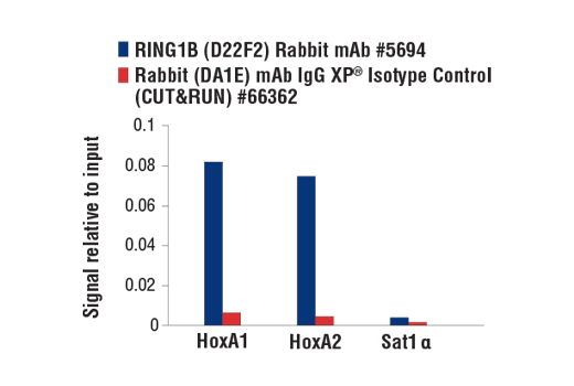 Image 3: RING1B (D22F2) XP® Rabbit mAb