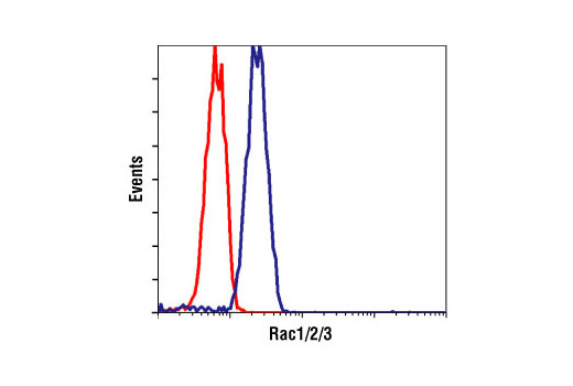 Flow cytometric analysis of Jurkat cells, using Rac1/2/3 Antibody (blue) compared to a nonspecific negative control antibody (red).