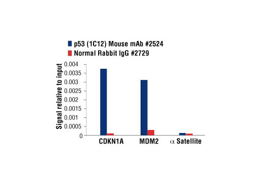 Chromatin immunoprecipitations were performed with cross-linked chromatin from HCT116 cells treated with UV (100 J/m<sup>2</sup> followed by a 3 hour recovery) and either p53 (1C12) Mouse mAb or Normal Rabbit IgG #2729 using SimpleChIP<sup>®</sup> Enzymatic Chromatin IP Kit (Magnetic Beads) #9003. The enriched DNA was quantified by real-time PCR using SimpleChIP<sup>®</sup> Human CDKN1A Promoter Primers #6449, human MDM2 intron 2 primers, and SimpleChIP<sup>®</sup> Human α Satellite Repeat Primers #4486. The amount of immunoprecipitated DNA in each sample is represented as signal relative to the total amount of input chromatin, which is equivalent to one.