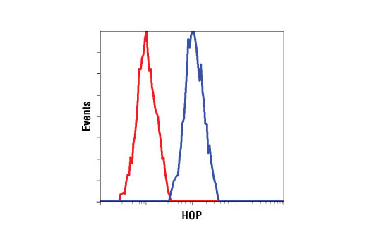 Flow cytometric analysis of untreated HeLa cells using HOP (D10E2) XP<sup>®</sup> Rabbit mAb (blue) compared to Rabbit (DA1E) mAb IgG XP<sup>®</sup> Isotype Control #3900 (red).