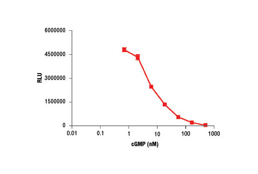 Image 1: Cyclic GMP XP® Chemiluminescent Assay Kit
