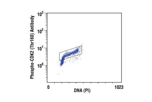 Flow Cytometry Image 1: Phospho-CDK2 (Thr160) Antibody