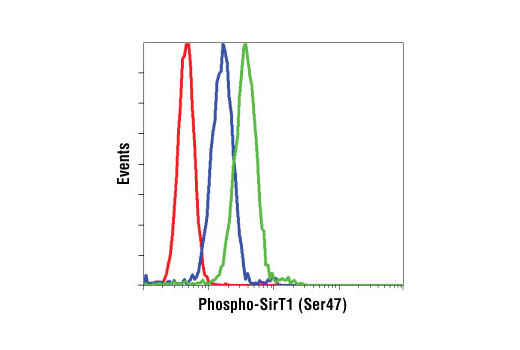 Flow cytometric analysis of K-562 cells, λ phosphatase treated (blue) or untreated (green), using Phospho-SirT1 (Ser47) Antibody compared to a nonspecific negative control antibody (red).