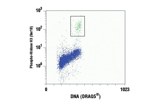 Flow cytometric analysis of Jurkat cells using Phospho-Histone H3 (Ser10) (D2C8) XP<sup>®</sup> Rabbit mAb (PE Conjugate) compared to DRAQ5<sup>®</sup> #4084 (DNA content). The box indicates phospho-histone H3 positive cells.