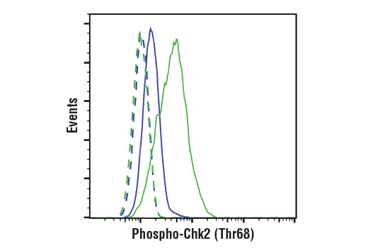 Flow Cytometry Image 1: Phospho-Chk2 (Thr68) Antibody