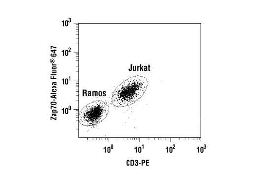 Two-color flow cytometric analysis of a mixed population of T and B cells (Jurkat and Ramos, respectively) using Zap-70 (136F12) Rabbit mAb (Alexa Fluor<sup>® </sup>647 Conjugate) and a CD3 antibody. CD3 negative B cells have little or no Zap-70 staining, while CD3 positive T cells stain brightly for Zap-70 protein.