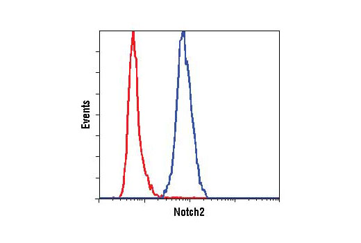 Image 5: Notch Isoform Antibody Sampler Kit