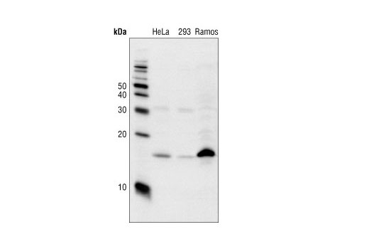Antibody Sampler Kit Response to Lead Ion