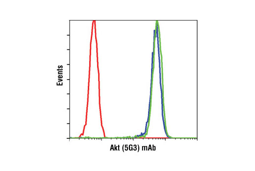 Akt (5G3) mAb #2966 staining of untreated (blue) or LY294002-treated (green) jurkat cells compared to a nonspecific negative control antibody (red).